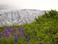 ann -Reid Glacier — at Glacier Bay National Park and Preserve
